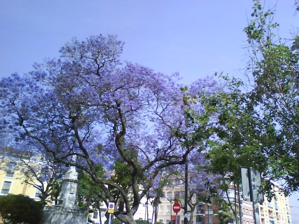 Me gustan los árboles de Málaga...y las flores (5/6)