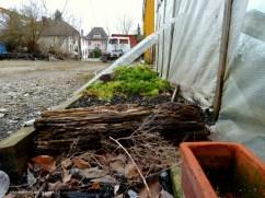 Aarau. Guerilla herb gardening