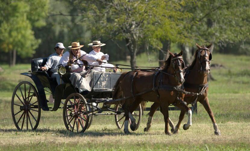 Carruaje con 2 caballos y 3 personas en un campo