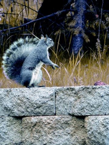 another backyard buddy
