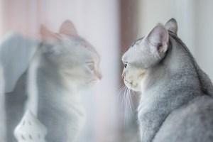 Me miro en el espejo