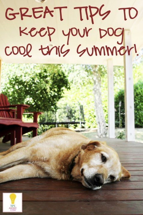Keep your dog cool  in the summer