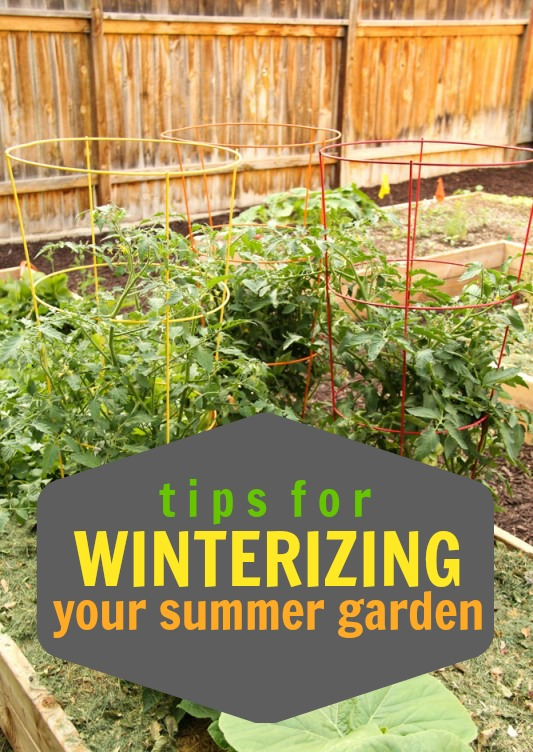 Tips for Winterizing Your Summer Garden via Tipsaholic.com