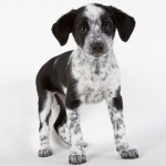 tipsaholic-tips-for-housetraining-your-puppy
