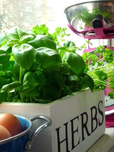 25 Fantastic Indoor Herb Garden Ideas - Tipsaholic.com #herbs #garden