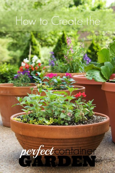 Creating a container garden can be simple if you follow these tips for choosing the right plants and containers. Spruce up your home with a pot or two! How to Create the Perfect Container Garden ~ Tipsaholic.com #container #garden #gardening