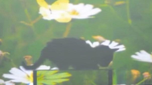 4231e6e2d0ed8b3a353ebeb650e446f1 article Científicos chinos vuelven un gato transparente [Ciencia]