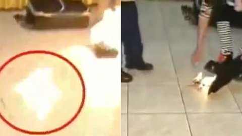 0010563192 Payaso quema paloma viva en show ante carajitos [Perú]