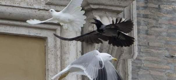 156570 620 282 Cuervo y gaviota atacan dos palomas de la paz del Papa [Video]