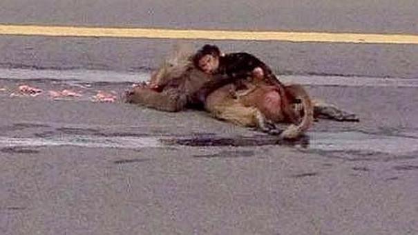 cria mono arabia 644x362 Monito abrazando su madre muerta. Esto de va hacer llorar