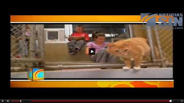 110 Estudiantes y gatos en Pennsylvania se ayudan mutuamente [Video]
