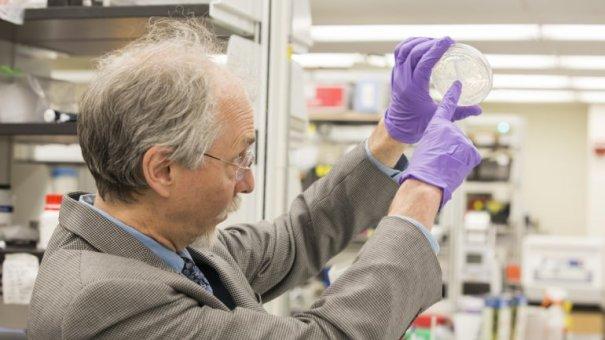 0010836563 Crean un cromosoma artificial de levadura [Ciencia]
