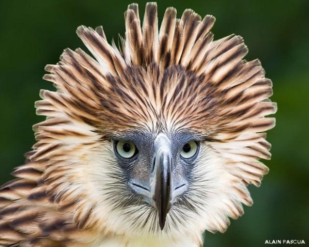 140412100439 avesaguila 624 Conozca a las aves más raras del mundo [fotos]