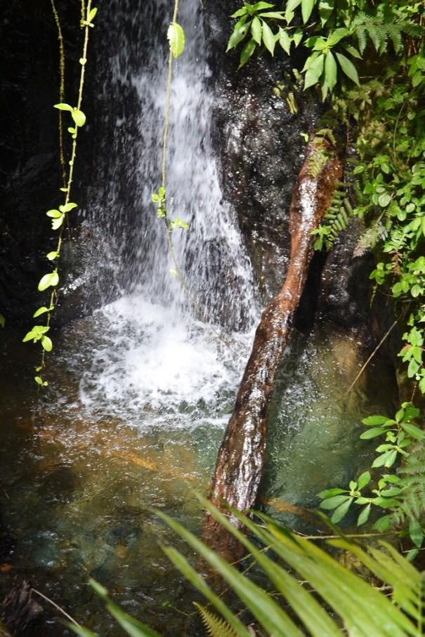 Cascada en Ebano Verde Casabito Constanza