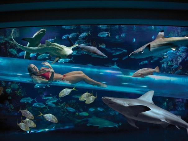 sharkchute 9 de las más espeluznantes piscinas [fotos]