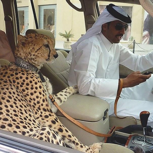 enhanced 5987 1401168020 8 35 cosas que usted sólo vería en Dubai