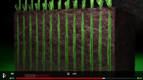 24 El césped híbrido en estadio del Mundial [Video]