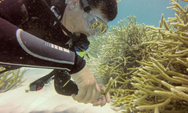Durante el buceo que realizó Diario Libre en los Jardines de Coral de Punta Cana