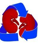 donacion de organos via internet 300x350 Dominicanos y la donación de órganos