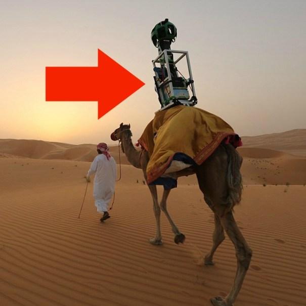 Camello con camara de Google Street View