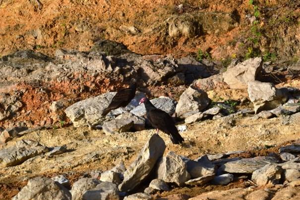 Impactante sequia en la presa de Hatillo  (4)