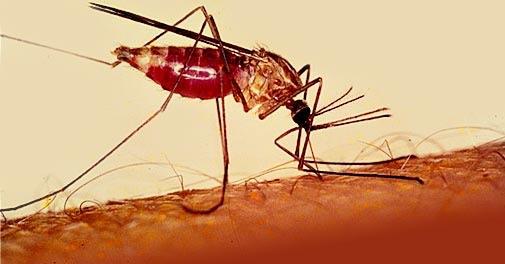 image112 La República Dominicana logra controlar la malaria