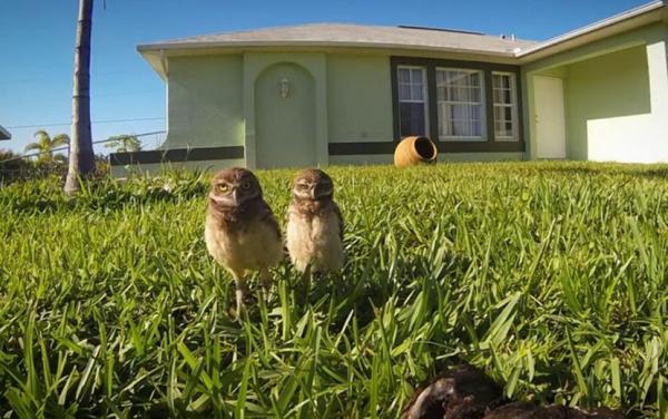 owls10n-3-web