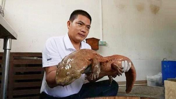 img 6643 Descubren en China una salamandra de 170 millones de años