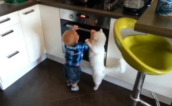stove26n 1 web Video    Gato intenta mantener el carajito lejos de horno