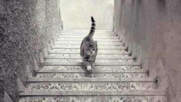 Foto-gato-sube-baja-escaleras