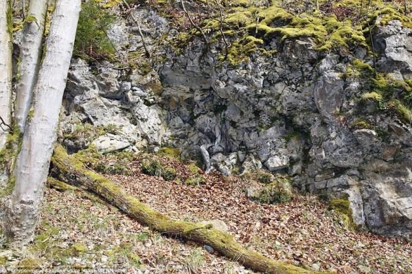 image374 Fotos   ¿Puede usted encontrar la modelo encuera camuflajeada por árboles y rocas?