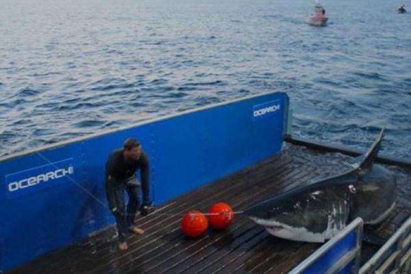 image452 Chequea a @MaryLeeShark la tiburón con cuenta de Twitter