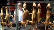 festival-yulin-mercado