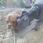 enterro-perro-vivo-francia
