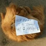 matan-perro-golpes-florida