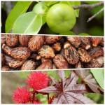 plantas venenosas OJO! Chequea las plantas más venenosas del mundo