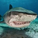 tiburon Se salva en tablita tras mordía de tiburón [EE.UU]
