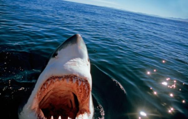 drones-vs-tiburones-australia