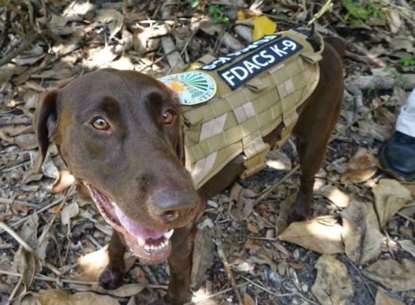 perro llamado gatillo pega cartuchazo a su duena queseto Perro llamado Gatillo pega cartuchazo a su dueña [Queseto!]