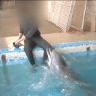 guacala Denuncian a entrenador por darle manigueta a delfín