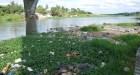 Algas Rios RD