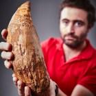 diente-fosil-ballena-gigante-australia