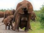elefanta Foto –Elefanta sin brasier sorprende en Sudáfrica
