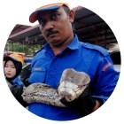 piton-malasia-r