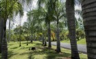 palmas-arbol