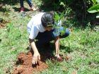 Reforestación río Ozama