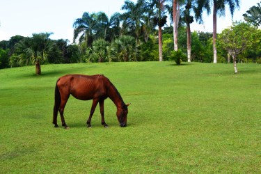 caballo República Dominicana y la deforestación