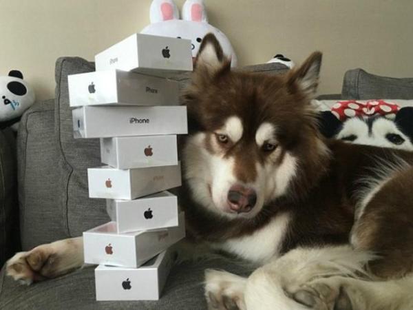 8 Echando vaina   Tipo regala ocho iPhone 7 a su perro