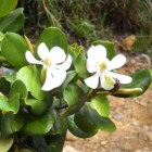 flora Flora y fauna dominicana: 333 especies en peligro crítico