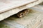 gato 'Reclutan' gatos callejeros contra ratas en NY